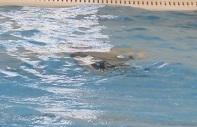 どこまで泳げるか.jpg